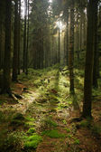 Morning sunlight through the forest — Foto Stock