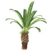 Palm tree isolated. Phoenix canariensis — 图库照片