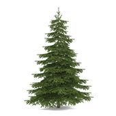 Tree isolated. Picea fir-tree — Stock Photo