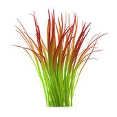 Plant bush isolated. Imperata — Stock Photo