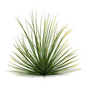 Plant bush isolated. Agave stricta — Stock Photo
