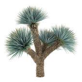 Palm plant tree isolated. Yucca Elat — Stock Photo