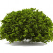 Exotic bush isolated — Stock Photo #37926161
