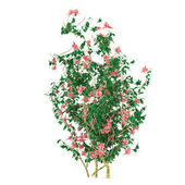 Bush with flowers isolated — Stock Photo