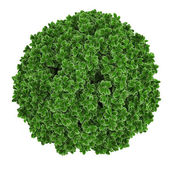Plant bush top isolated. — Stock Photo