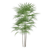 Palm plant tree — Stock Photo