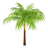 Decorative palm — Stock Photo