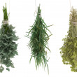 Estragon, parsley, sagebrush, tarragon — Stock Photo