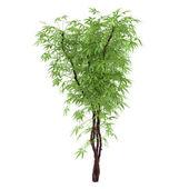 Decorative plant bush — Stock Photo