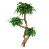 Decorative plant — Stock Photo