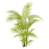 Palmiye ağaç bitki — Stok fotoğraf