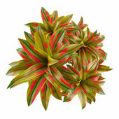 Plant palm top — Stock Photo
