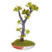 Decoratieve bonsaiinstallatie in de pot — Stockfoto