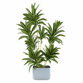 Palma pianta in vaso — Stock fotografie