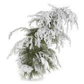 Winter fir-tree on snow isolated — Foto de Stock