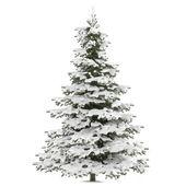 Winter fir-tree on snow isolated — Photo