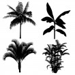 Palm silhouette — Stock Photo #38144177