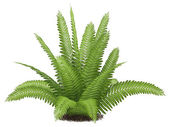 Fern isolated — Stock Photo