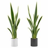 Decorative grass plant in flowerpot — Stock Photo