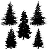 Fir-tree silhouette — Stock Photo
