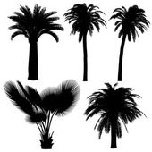 Silhouet van palm — Stockfoto