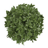 Plant bush top isolated — Stock Photo