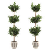 Topiary pot tree — Stock Photo