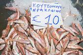 刚从海洋红色鱼类的品种 — 图库照片