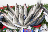 Fresh from the ocean  sea bass fish catch. — Foto de Stock