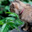 Brown cat sitting and looking on wall — Stockfoto #36651799