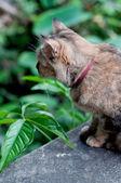 Gato marrom sentado e olhando na parede — Fotografia Stock