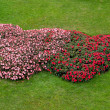 Flower garden heart shape — Photo