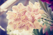 Beautiful orchid and vintage light — Stock Photo