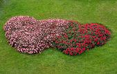 Flower garden heart shape — Stock Photo