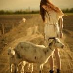 ������, ������: Shepherd with goats