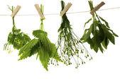 Celandine herbs nettle   mint — Stockfoto
