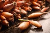 Onion seed — Стоковое фото
