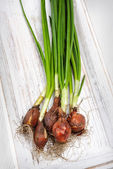 Fresh green onions — Stock Photo