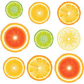 Citrus seamless — Vecteur
