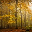 Stock Photo: Autumn mood