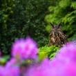 OWL in the flowers — Stock Photo