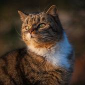 Cat sitting on grass — Zdjęcie stockowe