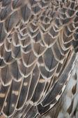Detail eagle — Foto de Stock