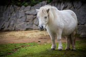 Pony — Stock Photo