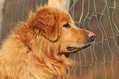 Dog in captivity — Stock Photo