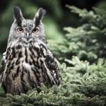 Owl on the tree — Stock Photo