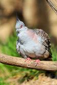 Bird from the zoo — Stock Photo