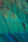 Detail of peacock — Stock Photo