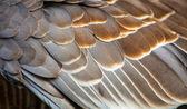 Bird detail — Stock Photo
