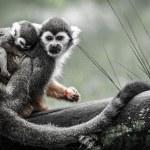 Monkey — Stock Photo #36601273